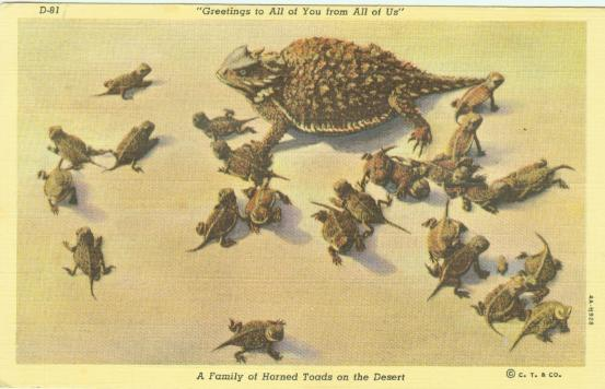 A family of horned toads.